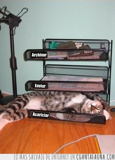 acariciar,archivador,bandeja,organizado