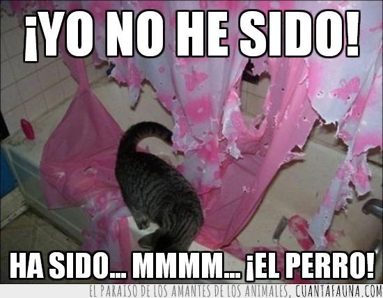 baño,cortinas,destrozar,echar la culpa,gato,perro