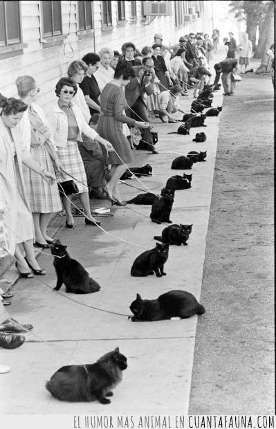 atados,blanco y negro,clases,collar,correa,gatos,negros