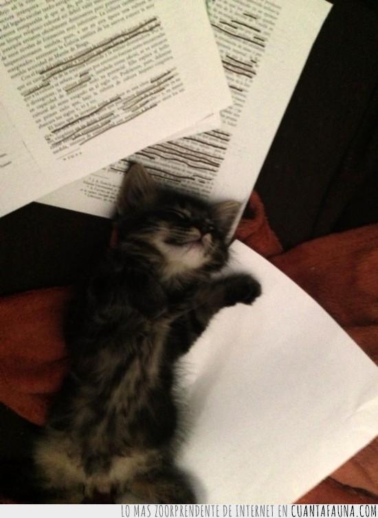 apuntes,dormido,dormir,examenes,gatito,hojas de papel,recuperaciones