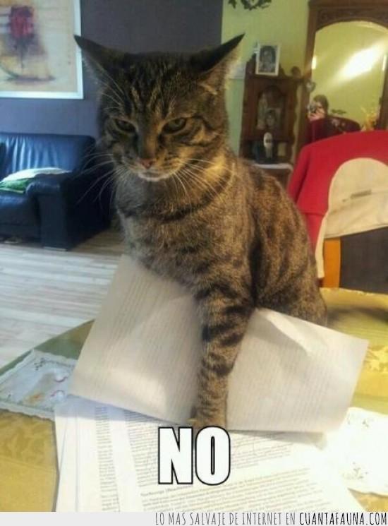 acariciar,estudiar,gato,no,papeles