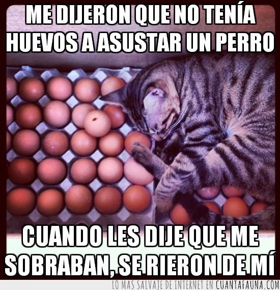 decir,gato,huevos,perro,tumbado