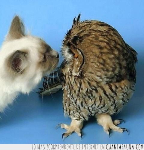búho,gato,lechuza,llevar la contraria
