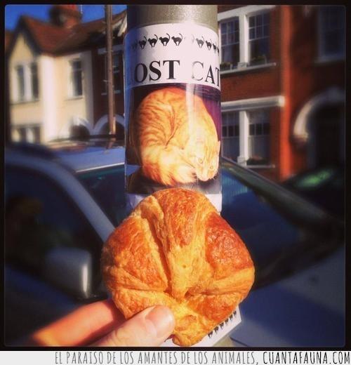 cartel,croissant,encontrar,farola,forma,gato,perdido,que raro