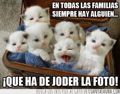 estropear,familia,foto,gatitos,joder,mono