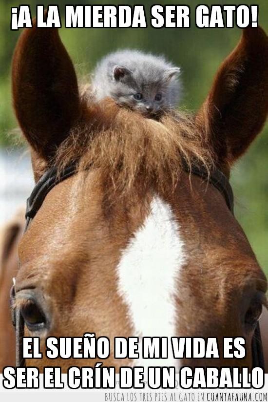 caballo,crin,mierda,pelos,ser gato