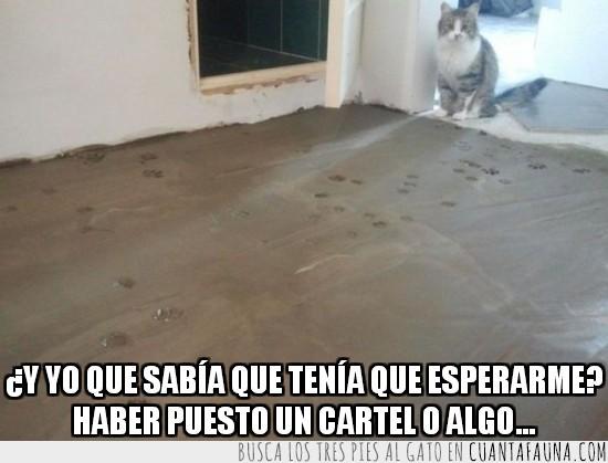 cabrón,cemento,fraguar,gato,huellas,pisar