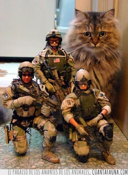gato,humano,juguetes,muñecos,soldados