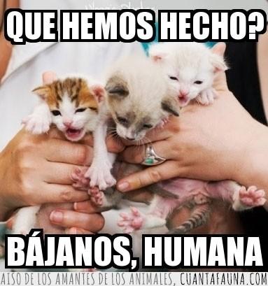 bebes,cachorros,gato,gatos,miedo,subidos
