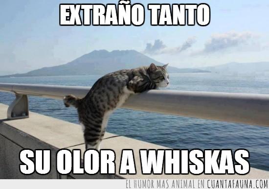 echar de menos,extrañar,gato,horizonte,mar,pensativo,whiskas