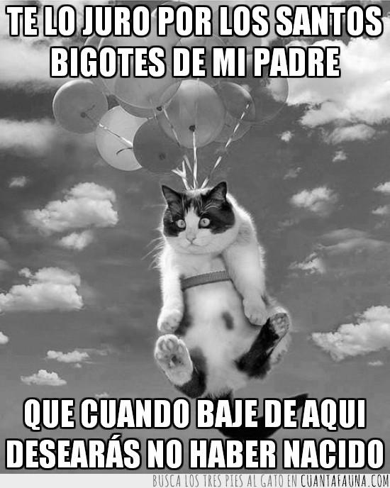 atado,bajar,flotar,gato,globos,helio,volar