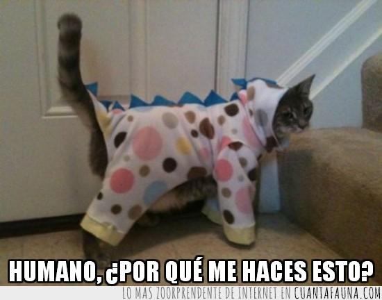 disfraz,disfrazado,escaleras,gato,vestido