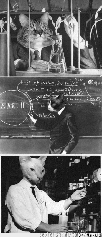 cientificos,dominar el mundo,experimentos,gato,gatos