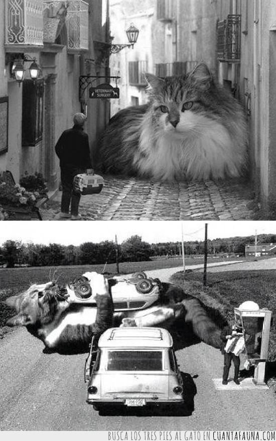 bloquear calles,comer coches,dominar,gatos,gigantes
