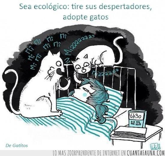 cama,despertador,dormir,ecologico,gatitos