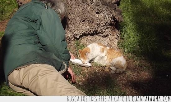 alimentar,Fe en la humanidad restablecida,gatos callejeros,jardín botánico