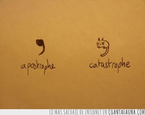 apostrofe,apostrophe,catastrophe,foto,gato