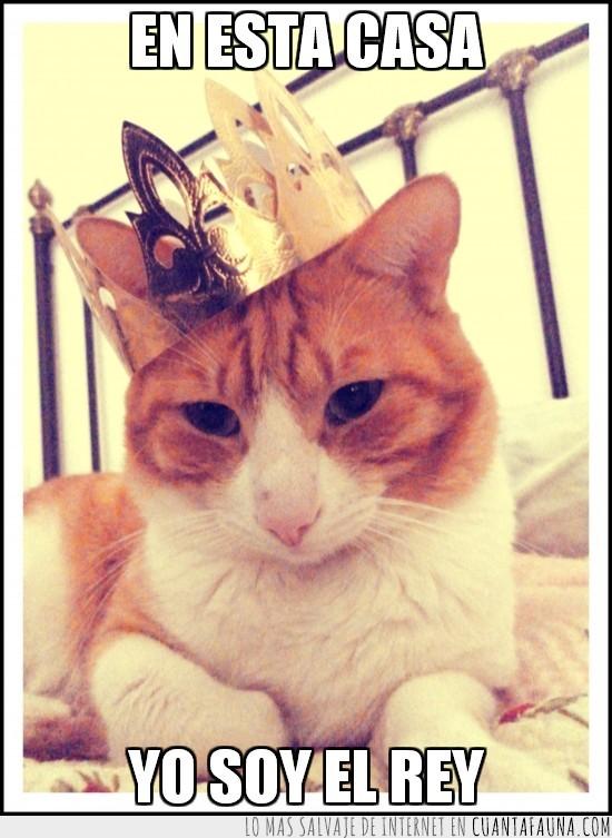 cama,casa,corona,coronado,gato,rey