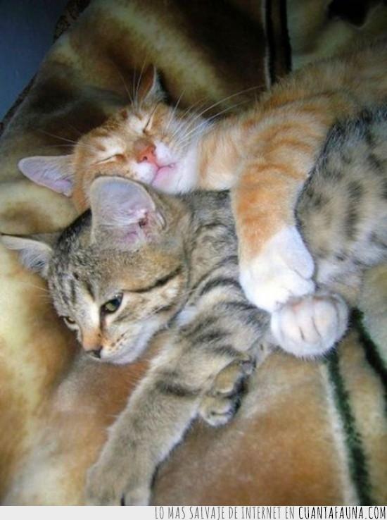 abrazo,gato,irse,marchar,tierno