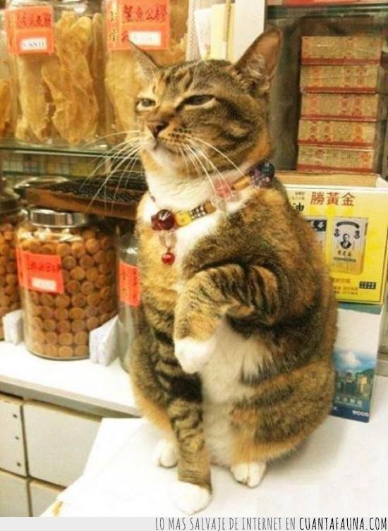 chino,estatuilla,gato,gato de la fortuna,maneki neko