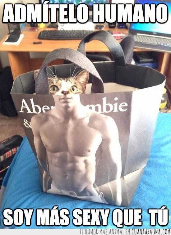 abercrombie,bolsa,escondido,fotogenia,gato,músculos