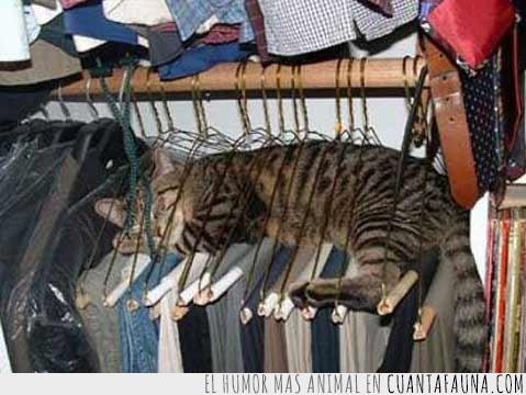armario,durmiendo,estirado,gato,incomodo,perchas,ropero