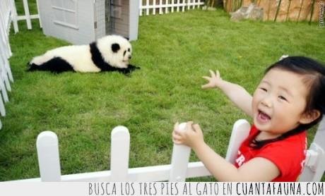 asiaticos,panda,perro,teñir