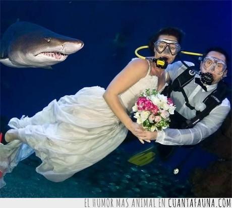 amor,foto,matrimonio,tiburón,vida