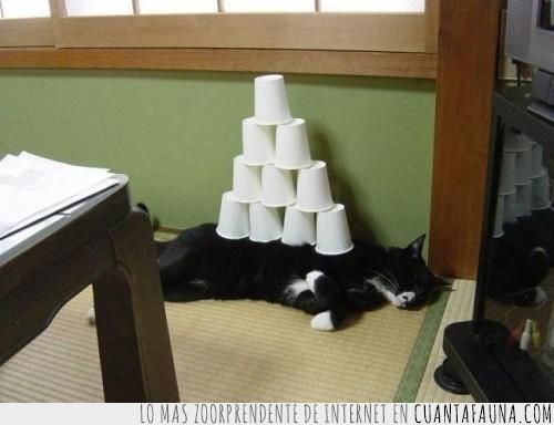 despertar,gato,pirámide,susto,vasos