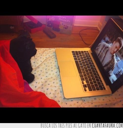 gato,manta,ordenador,película,tapado