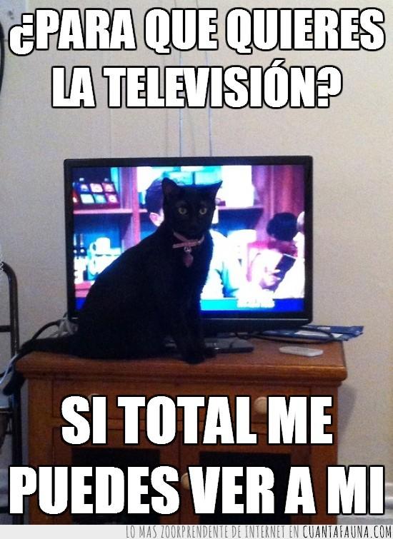en medio,gato,interrumpir,tapar,televisión,tv