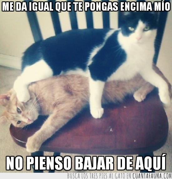 bajar,encima,gato,insistir,silla