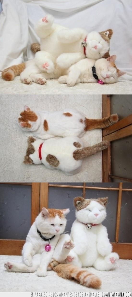 gato,muñeco,osito,peluche