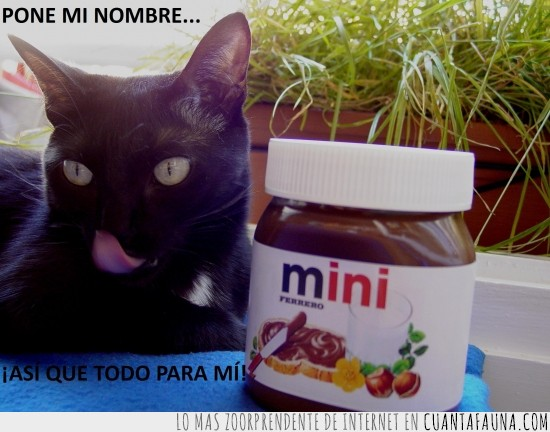 chocolate,gata negra,lengua,mini,Nutella,relamer