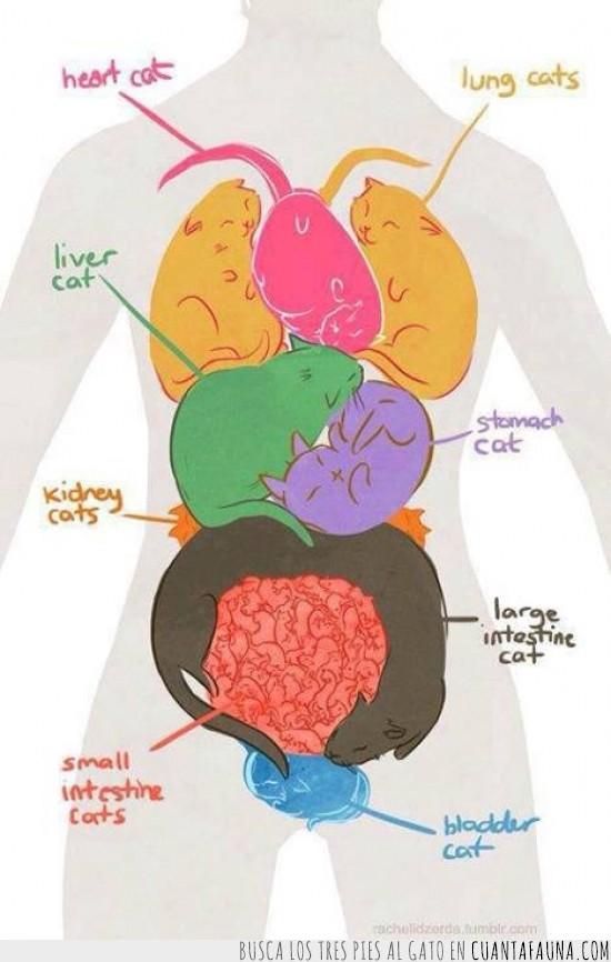 Cuánta Fauna > Lecciones de anatomía para gatófilos