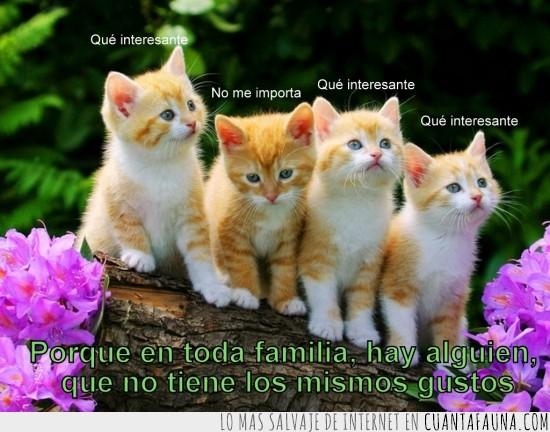 familia,gatitos,mismos gustos,no me importa,que interesante