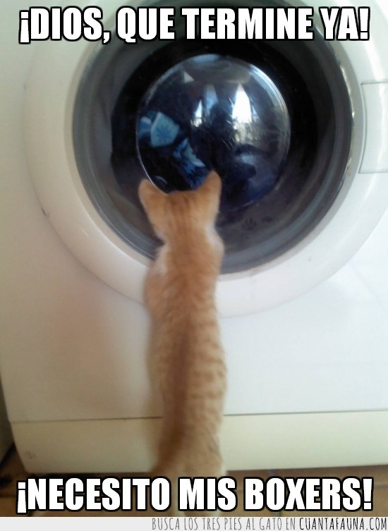 boxers,lavado,lavadora,mirar,puerta