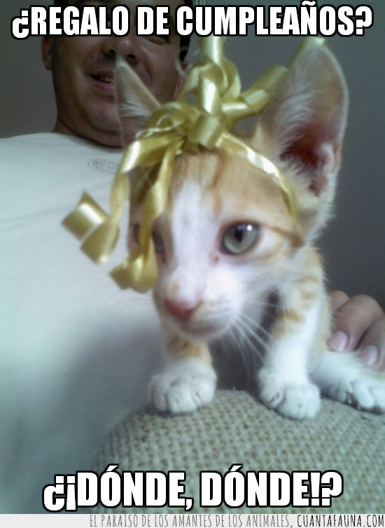 cinta,cumpleaños,gato,lacito,lazo,regalo