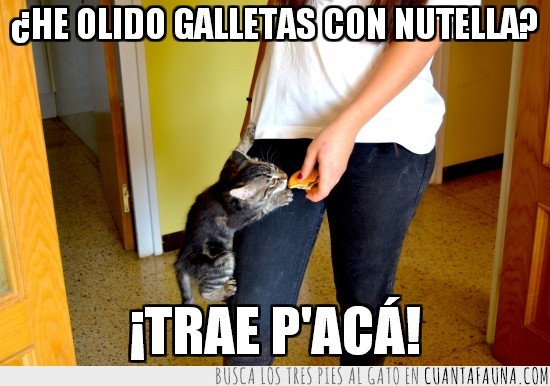 chocolate,escalar,galletas,gato,mono,nutella,pantalon,trepar