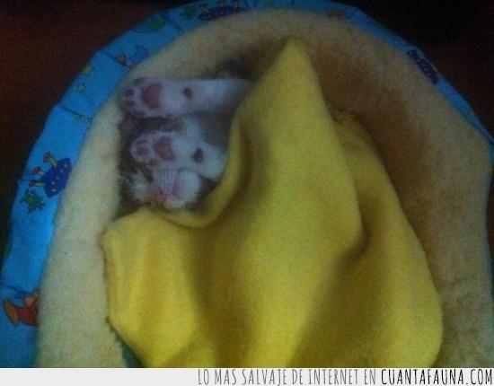 deslumbrado,dormido,Dormir,luz,tapar