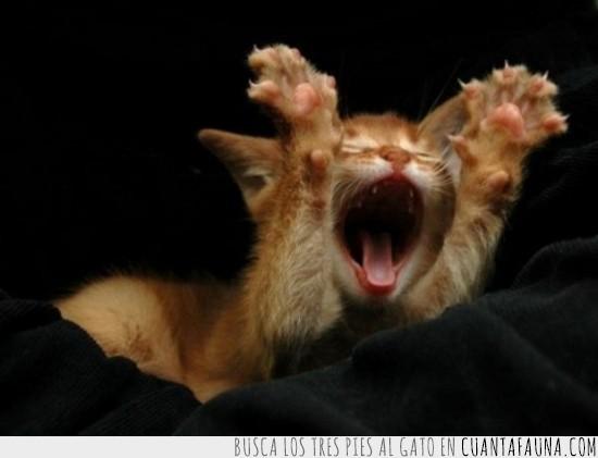 bostezo,estiramientos,estirarse,gato,levantarse