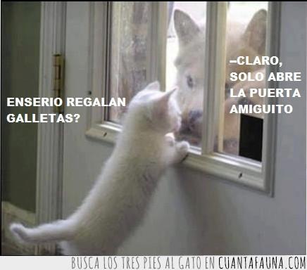 engaño,gato,inocente,malvado,mentira,perros malos,puerta