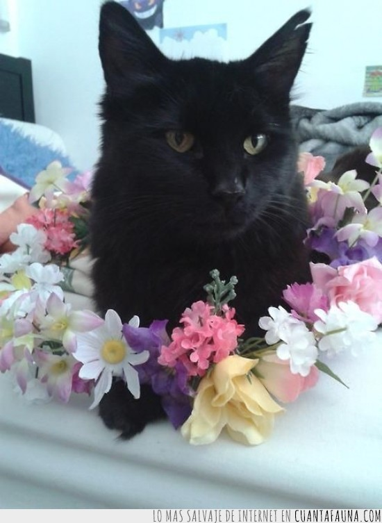 adorable,corona,flores,gato,gato negro,monada