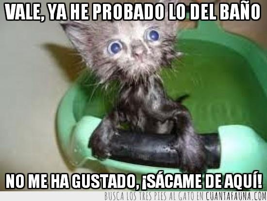 agua,bañar,baño,broma,cubo,gato,miedo,mojado,susto