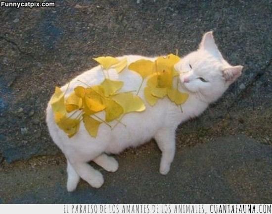 amigos,broma,encima,gato,hojas,troll