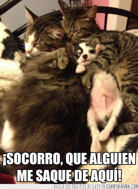 abrazo,cariño,gato,perrito,perro,secuestrado,socorro