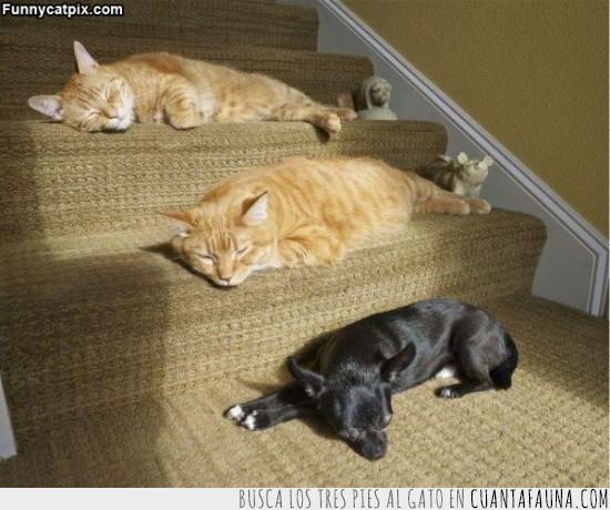 escaleras,escalones,gato,morenos,que felices están,sol