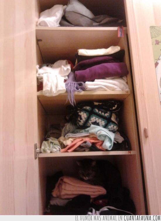 armario,escondido,gato,ropa