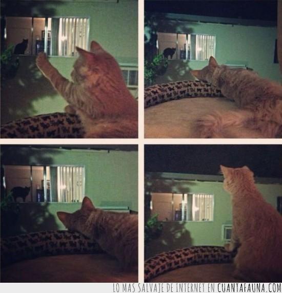 extrañar,gato,romantico,vecino,ventana