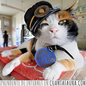 arena de gato,gato,olvidar,policia,ratones,sobornar
